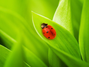 BLOG15 - ladybird