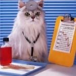 Фелинотерапия, или Как кошки помогают восстанавливаться после рака груди