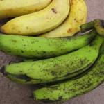 Полезный банан – зеленый банан