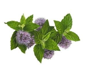BLOG2015-6 - herbs 3