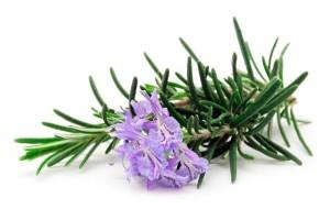 BLOG2015-6 - herbs 4