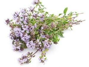 BLOG2015-6 - herbs 5