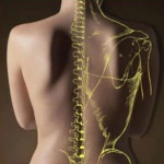 Светлана Степанова: «Остеопатия после рака груди. Мой личный опыт»